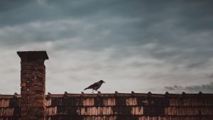 roof-animal-bird-raven-crow-wildlife-chimney